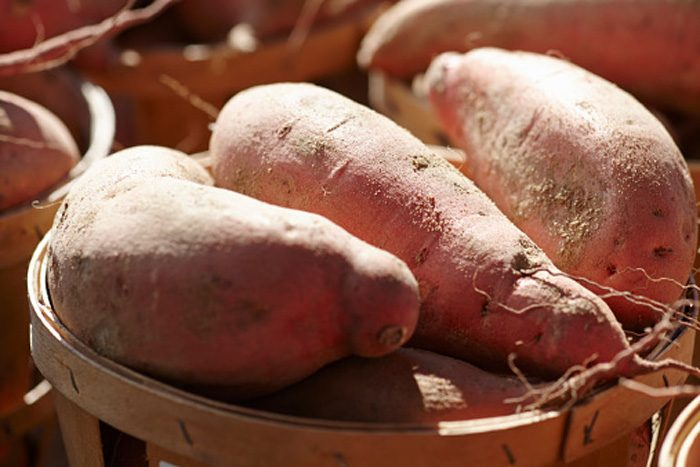 What's the Deal with the YouTube Video about Bud Nip in Sweet Potato?
