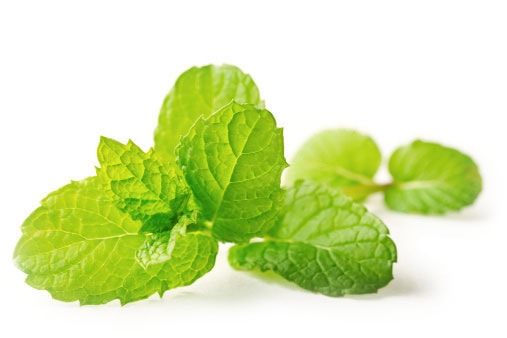 Mint: Health Benefits and How-To