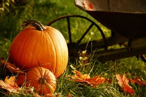 Pumpkins Offer Great Health Benefits